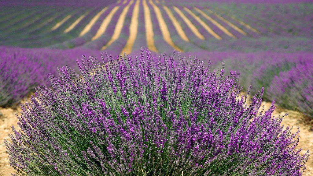Tourisme Chinois Provence série